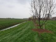 Bufferstrook 2.0 is een strook tussen sloot en landbouwperceel beplant met bijvoorbeeld hazelnootbomen.