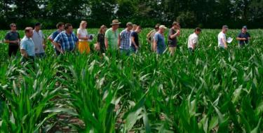 Grondig boeren met maïs